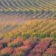 "Colori autunnali in Romagna/Autumn colors in ""Romagna"""