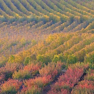 "Colori autunnali in Romagna/Autumn colors in ""Romagna"""