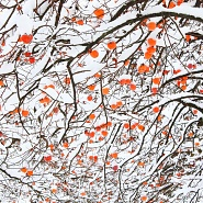 Neve/Snow