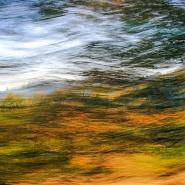 Movimenti autunnali/Autumnal movements