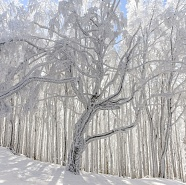 "Foresta ""Casentinese"" in inverno / ""Casentinese"" forest in winter"