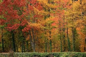 Etang de Rambutot-  Couleurs et reflets d'un bel apres- midi d'automne en Brionnais - Colori e riflessi di un bel pomeriggio d'autunno nel Brionnais- (Bourgogne- Francia)